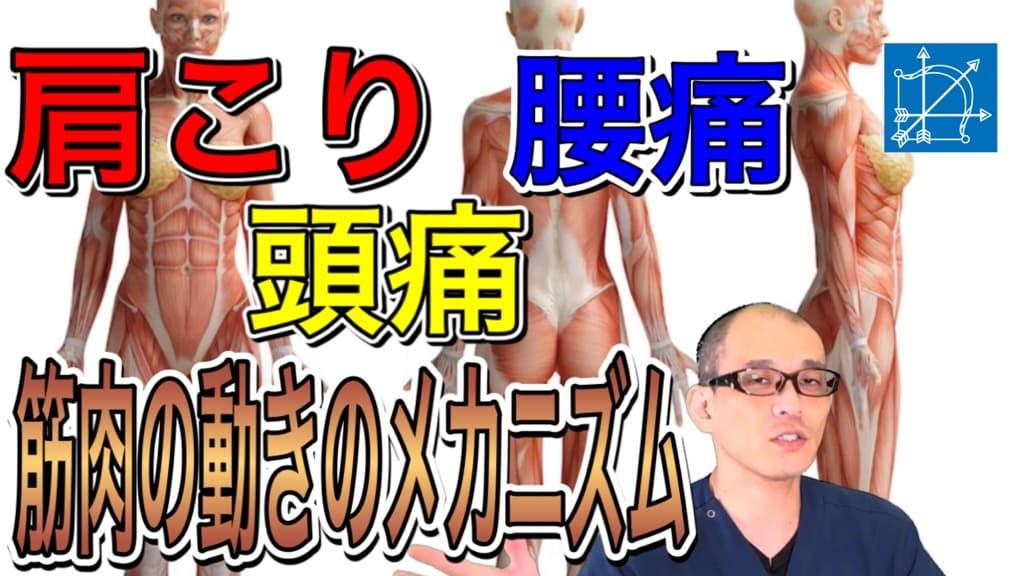 【渋谷区恵比寿 】頭痛・肩こり・腰痛の原因になる筋肉.jpg